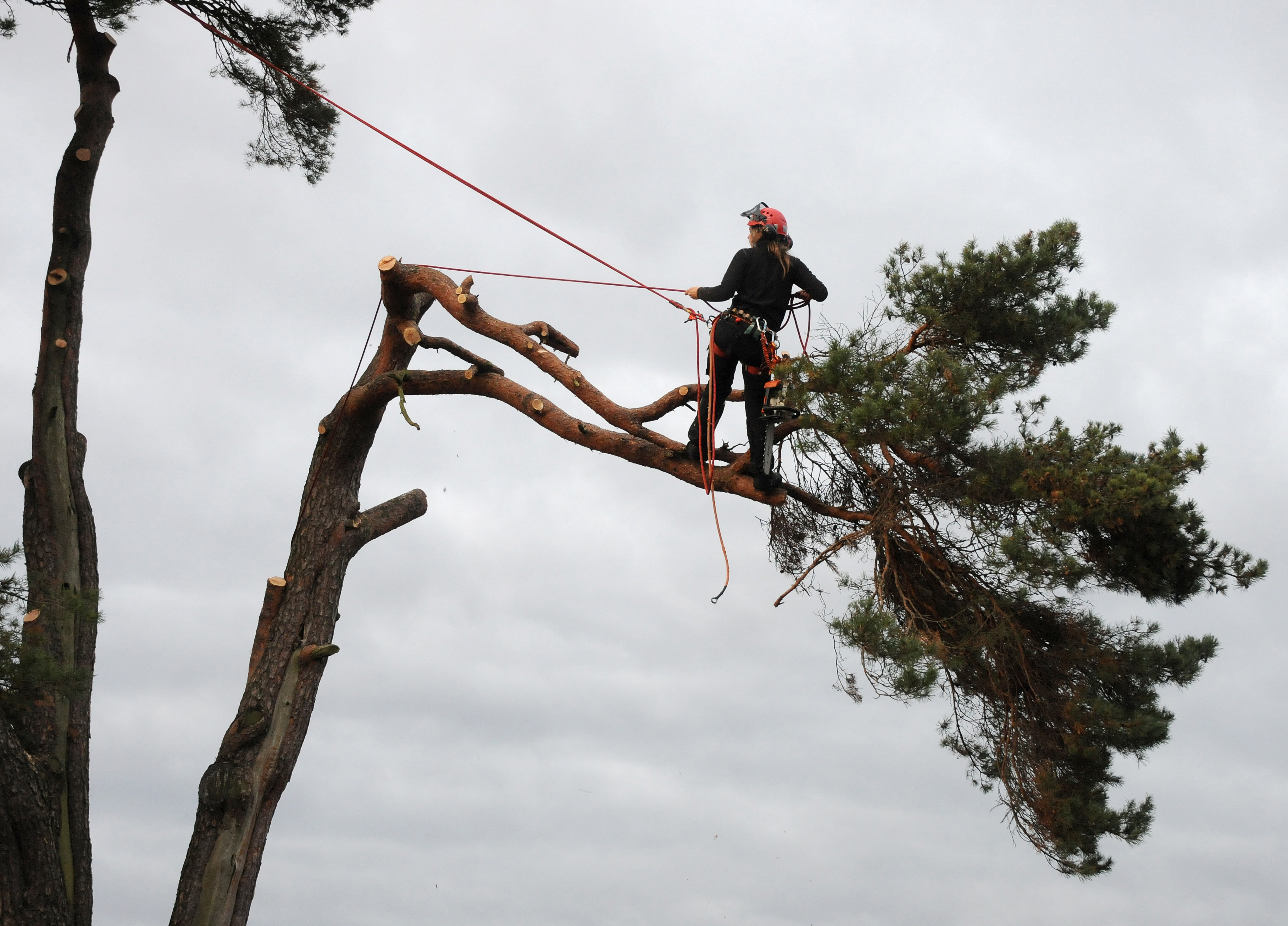 Tree Fellas | Affordable Tree Service Fort Collins