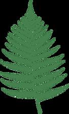 fern-159715_1280.png