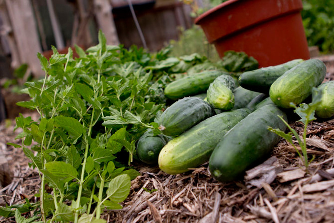 5 Basic Tips For Creating a Juice Garden