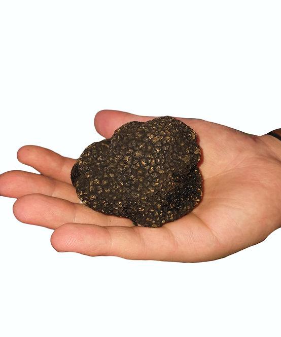 Fresh Italian Summer Black Truffle - 250 gr plus
