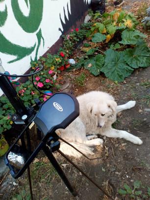Földmérő Kutya akcióban...
