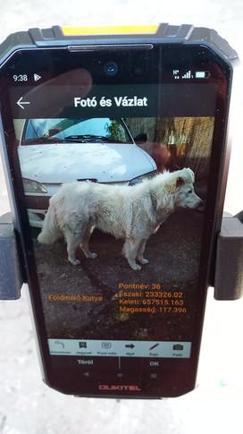 Földmérő Kutya rögzítve