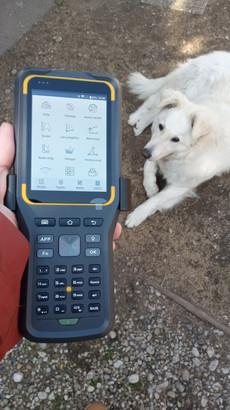A Földmérő Kutya figyelmét élvezve