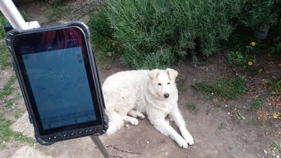 Földmérő Kutya, mint segéderő