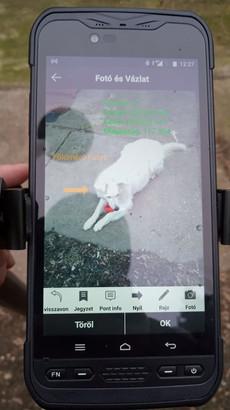 Földmérő Kutya, mint Fotó&Vázlat