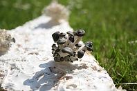 Mushroom pic.jpg
