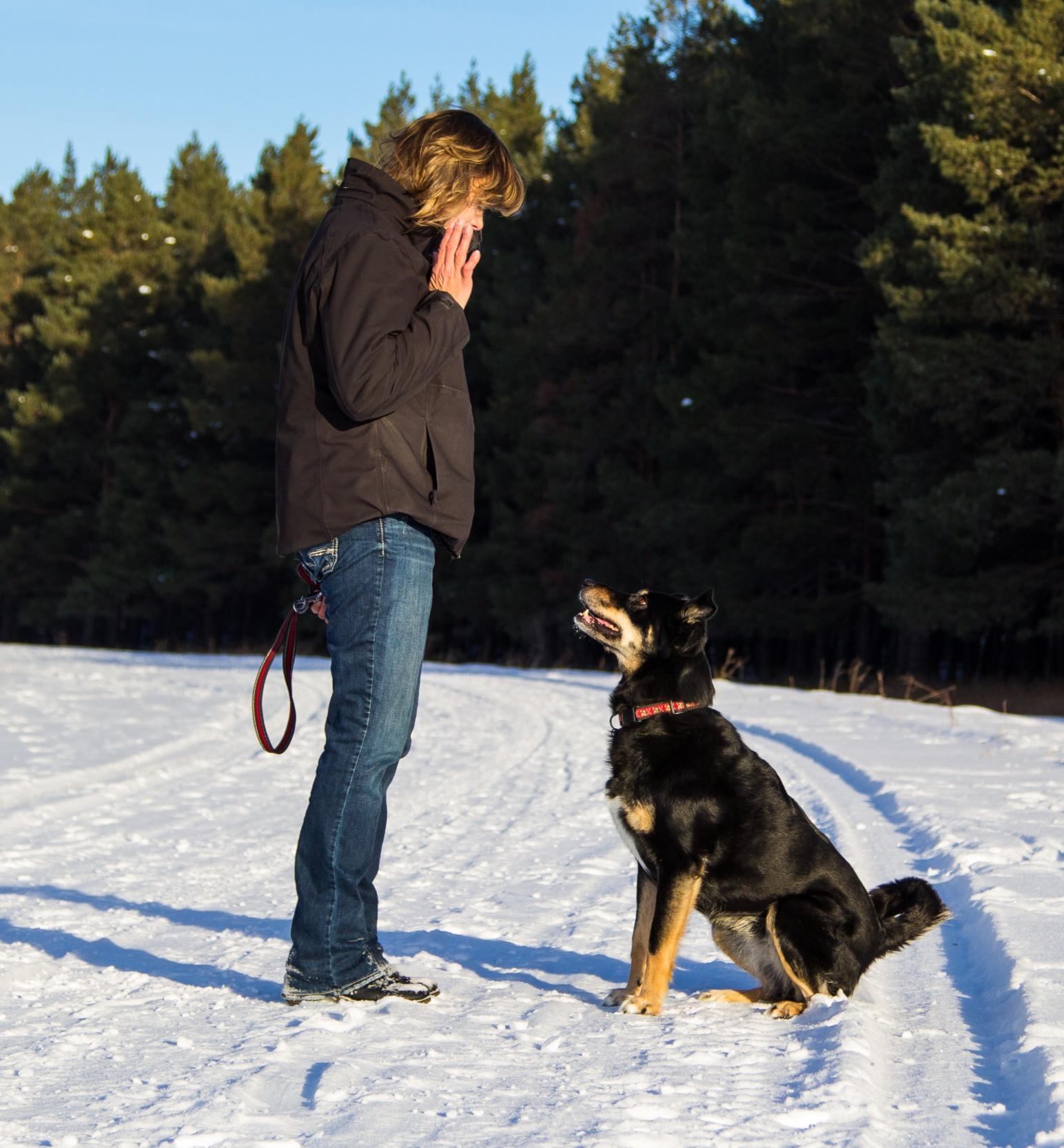 Private Basic Dog Training