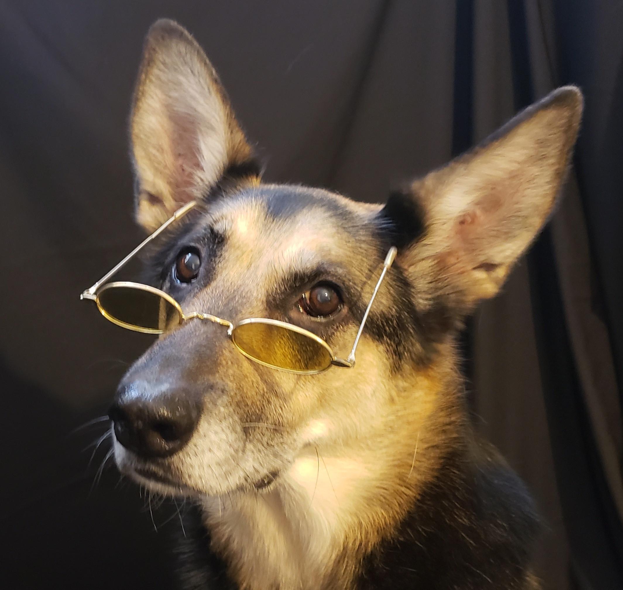 Dog Evaluation