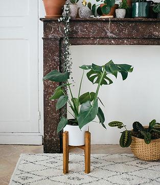 carnet_de_printemps_-_présentoir_plante.