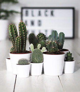 mini cactus diy.jpg