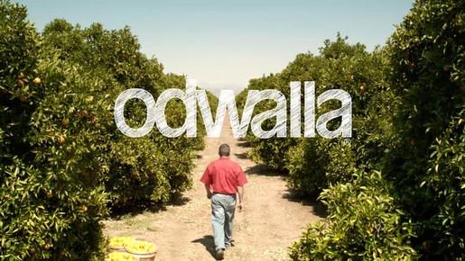 Odwalla 'Orchard'