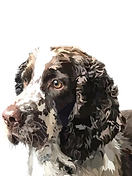 OLLY PNG