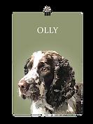 OLLY PRINT