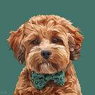 PET PROFILE PICTURE