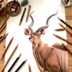 Wildlifeart A3.JPEG
