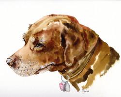 A3 Lottie Labrador