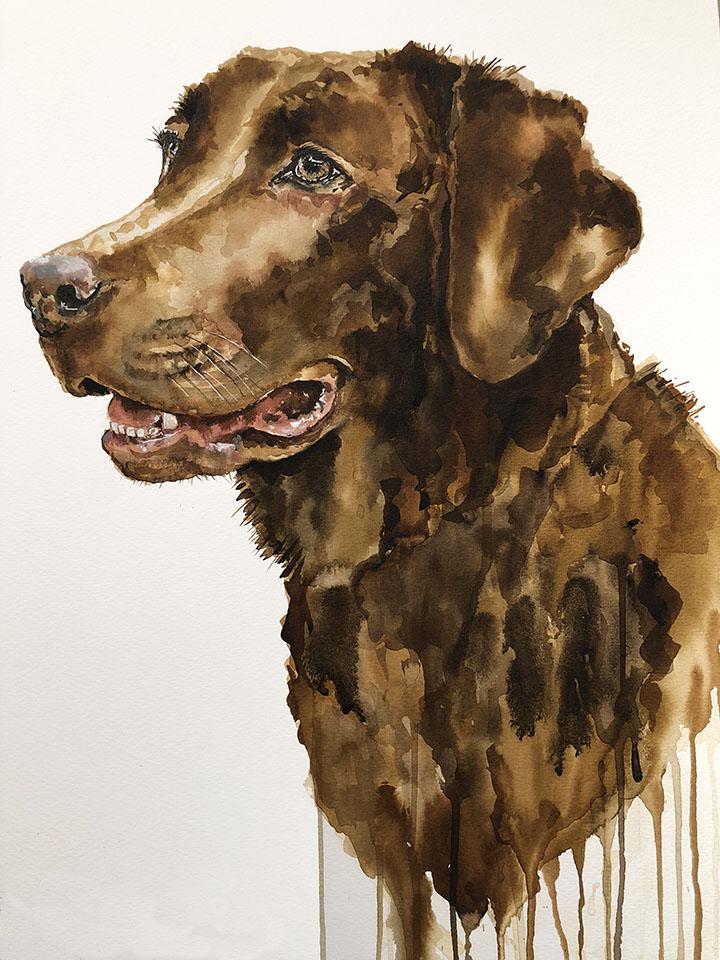 A3 Bruno Labrador
