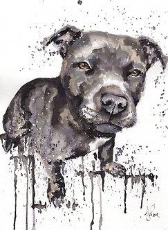 Buy a Pet Portrait