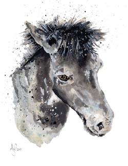 A4 Fern the pony