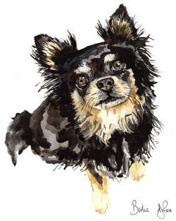 A4 Chihuahua Bertie