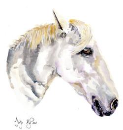 A4 Jojo horse