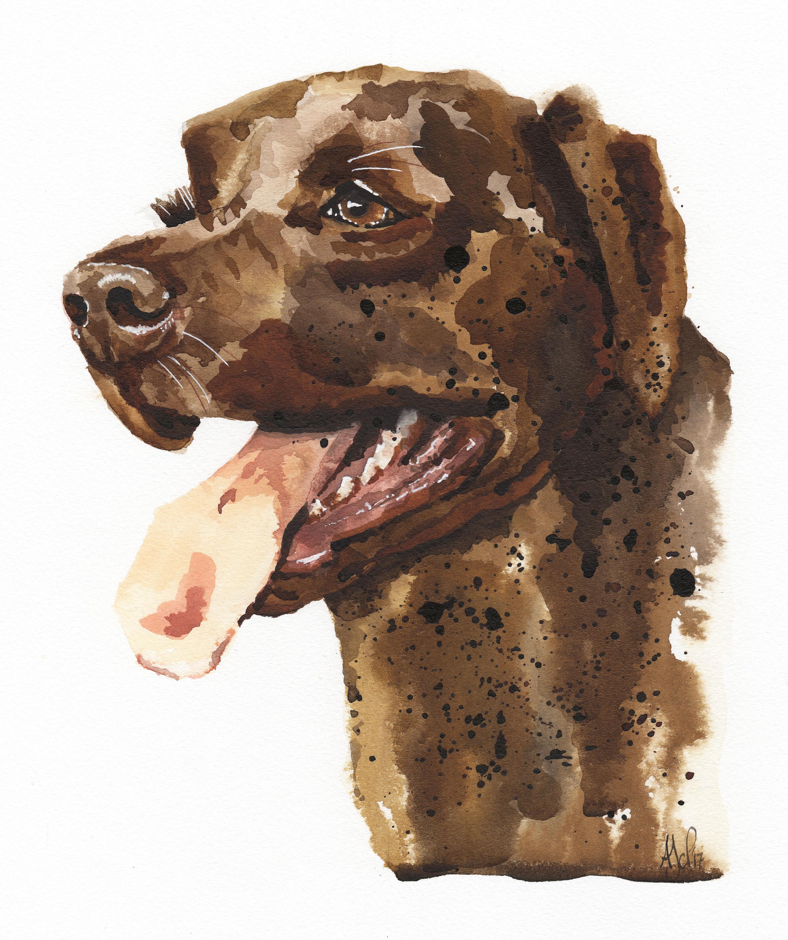 A4 Labrador