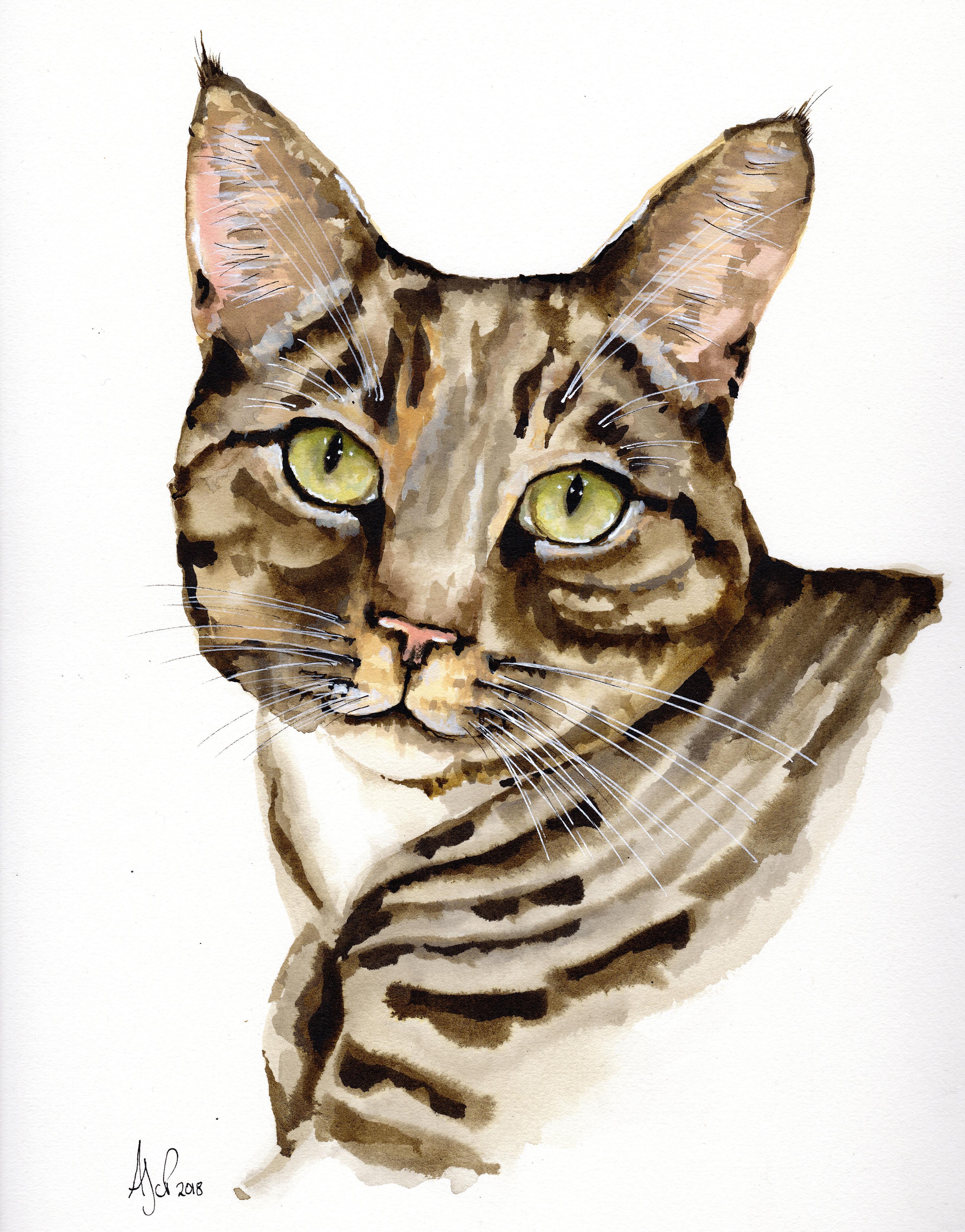 A3 Tigs Cat