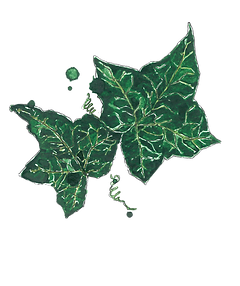 Ivy_edited.png