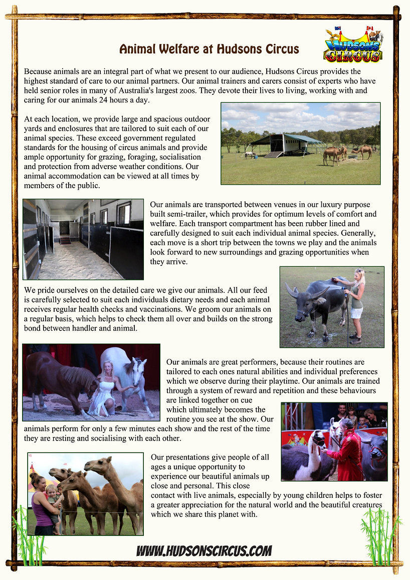 07-04-17 - Hudson - Animal Flyer-1 web.j