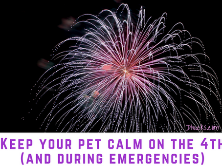 Keep your pet calm on the 4th (and during emergencies)