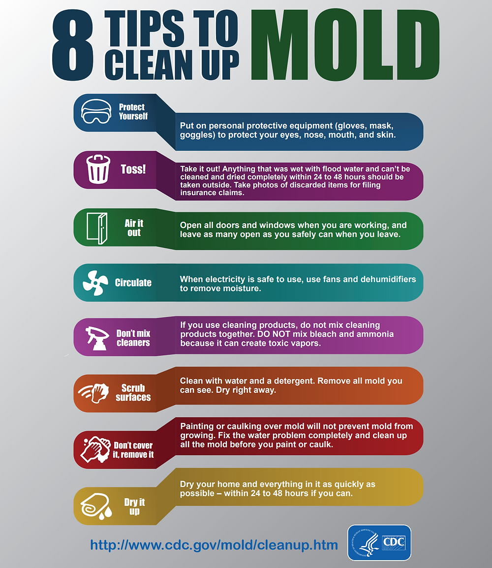8 Tips to Clean Up MOLD from the CDC