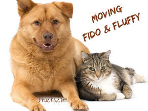 Your Checklist for Moving Fido and Fluffy