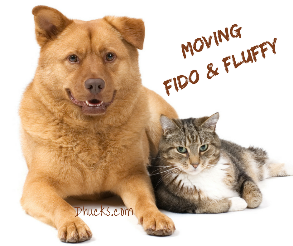 moving your pet