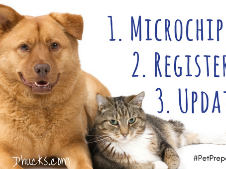 3 Easy Steps to the Safe Return of Your Pet