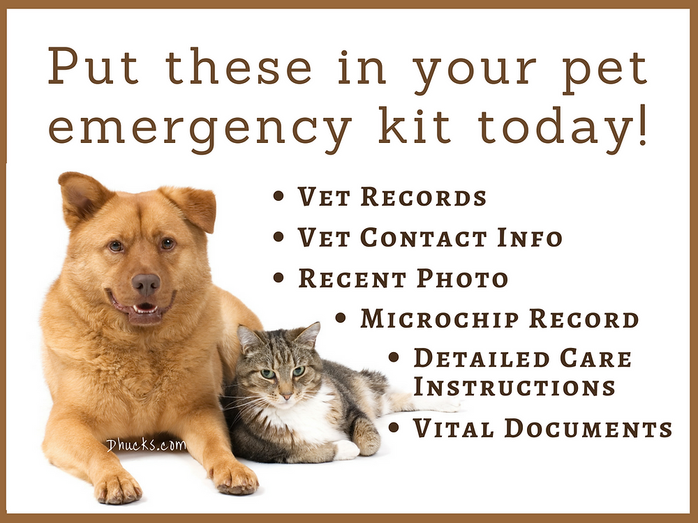 put these documents in your pet emergency kit