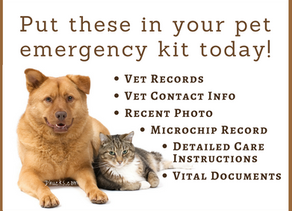 7 documents you must have in your pet's emergency kit