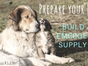 Prepare your Pets - Build an Emergency Supply Kit