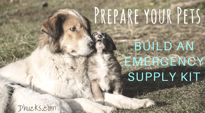 Prepare Your Pets: Build an emergency supply kit for them