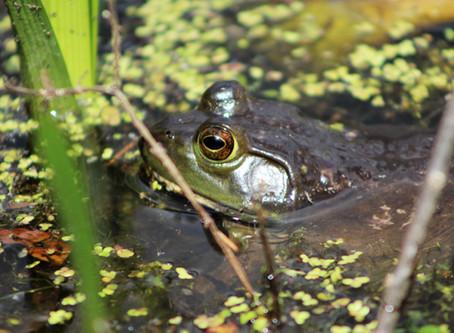 April 5, 2018 - Amphibian Facts