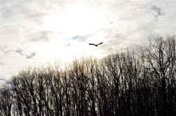 Raptor in the air