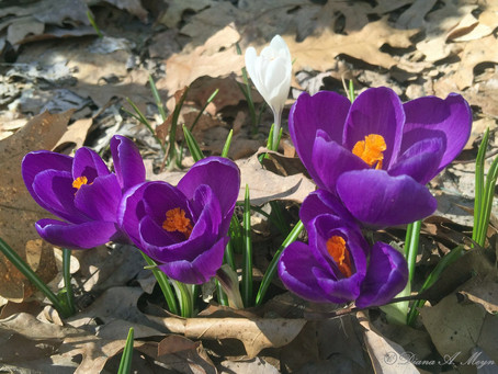 March 28, 2018 - Five Signs of Springtime