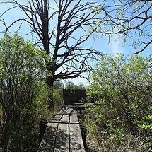 Apalachin Marsh1 (1).jpg