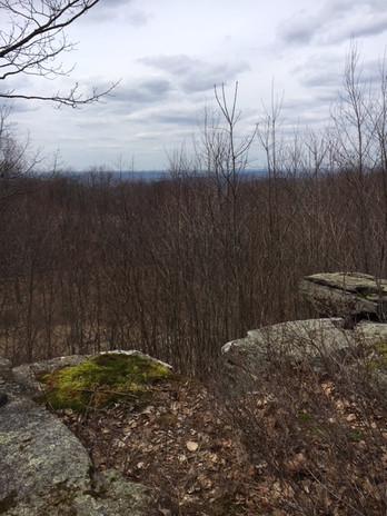 Pettus Hill Preserve overview