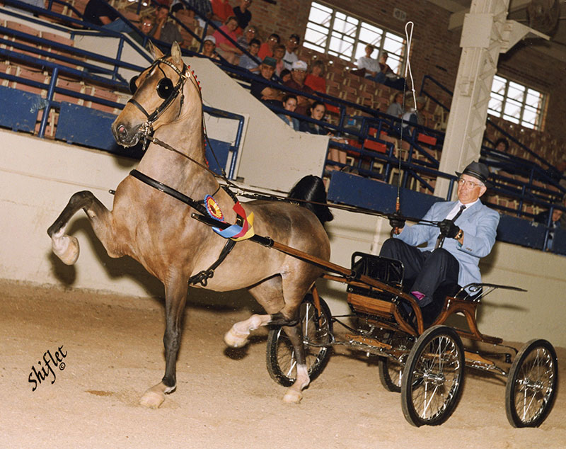 Heartland Elegant Dancer in 2002
