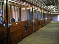 Stallion Stalls in Breeding Barn
