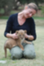 playing with lion cubs