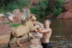 swimming with lions