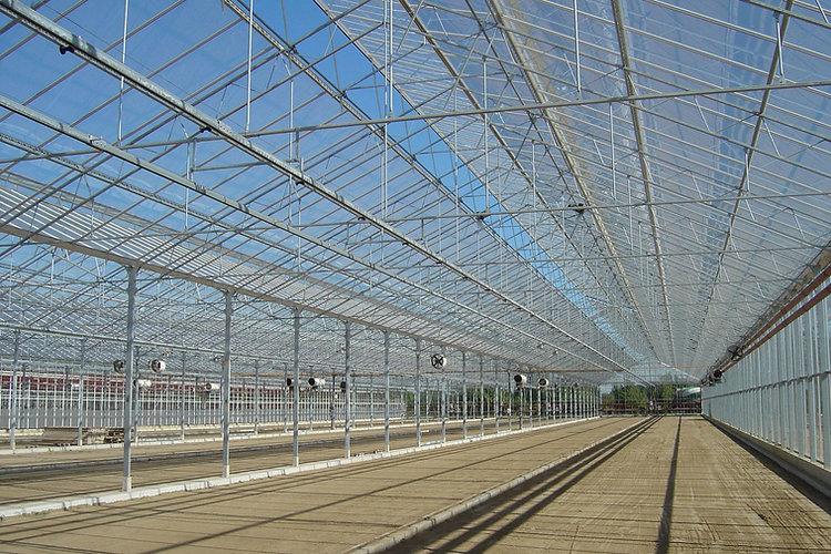 Widspan glasshouse image.jpg