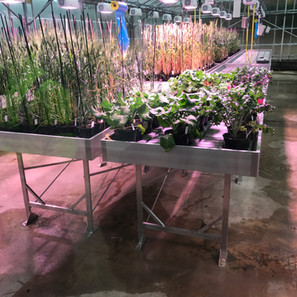 Static Bench with plants