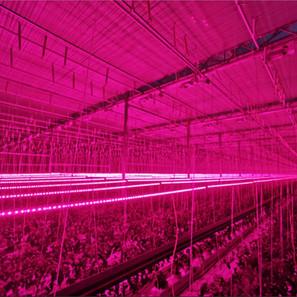 LED lighting photo.jpg